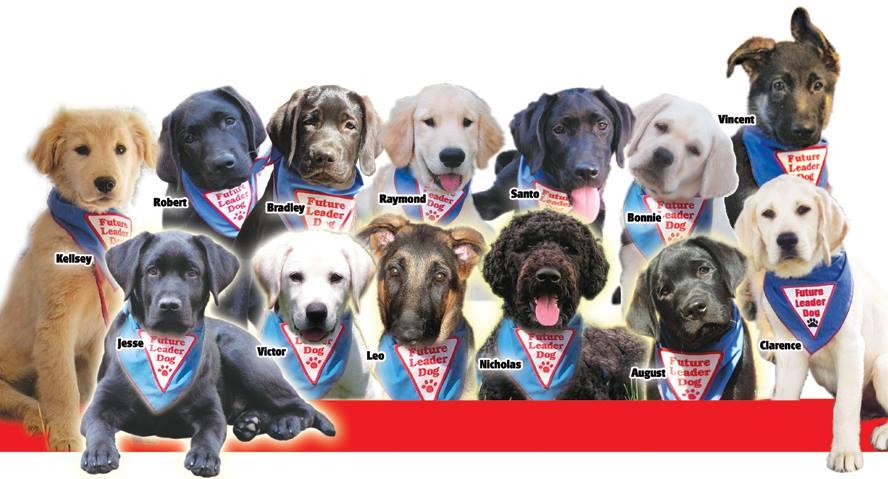 Pasta for Puppies